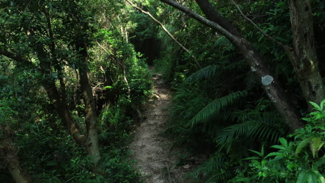 Walking-on-a-Trail-in-the-Woods-POV-Walking-pathway-through-a-fern-and-grass-covered-rain-forest-on-a-sunny-day