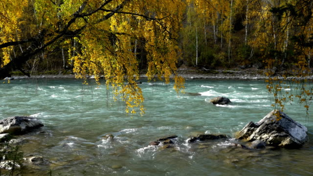 River-Birch-Branches-Above-Mountain-River-in-Autumn-Seamless-Loop