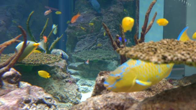 4K-Aquarium-Background-Video-