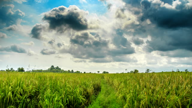 Rice-field-before-rain-time-lapse