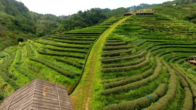 Vista-aérea-de-terraza-de-plantación-de-té-en-la-montaña-