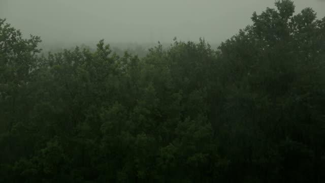Heavy-rain-and-wind-shakes-the-trees-Hurricane-