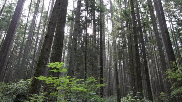 Bosque-dosel-Noroeste-Pacífico-4K-UHD