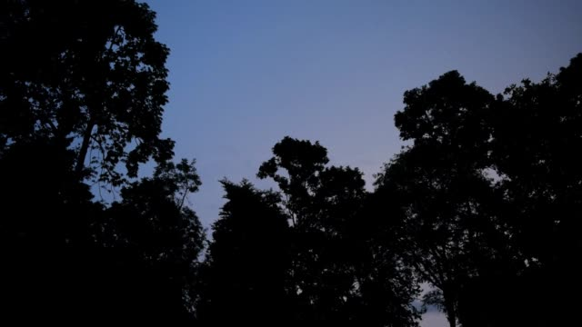 Wald-in-den-dunklen-Nächten-und-Gewitter