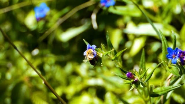 Biene-auf-einer-Blüte