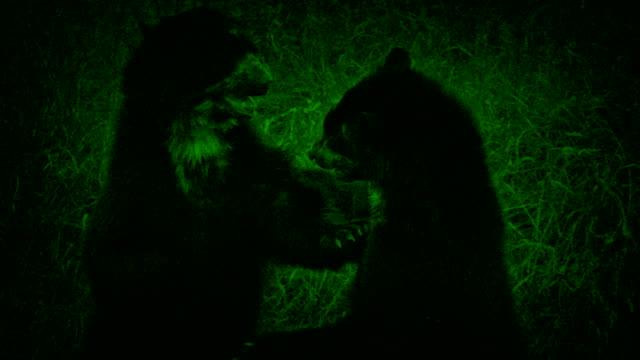 Nightvision-osos-en-estado-salvaje