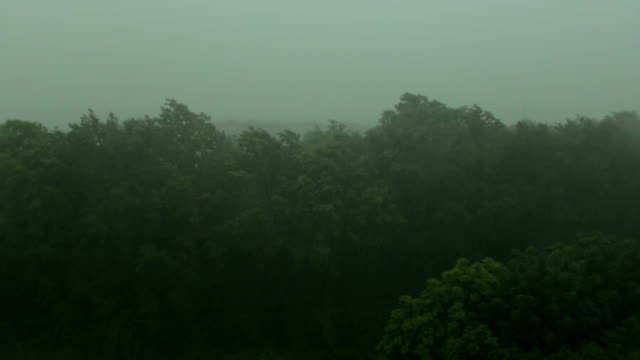 Starker-Regen-und-Wind-schüttelt-die-Bäume-Hurrikan-