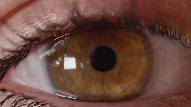 MACRO-DOF:-Brown-eye-looking-into-camera-which-refocuses-from-iris-to-eyelashes