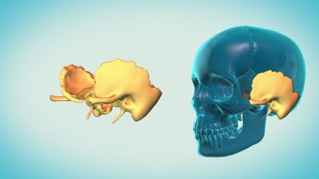 Temporal-Bone-with-a-heavenly-background