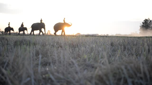 Abstract-blurred-at-background-of-elephants-are-walking-through-paddy-field-dry-in-Surin-Thailand-