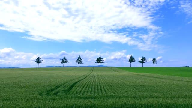 Beautiful-hill-fields-in-Hokkaido