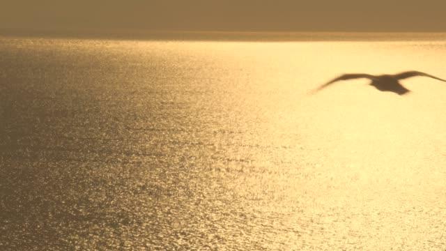 Seagull-bird-flying-over-ocean-surface