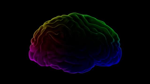 Multi-color-human-brain