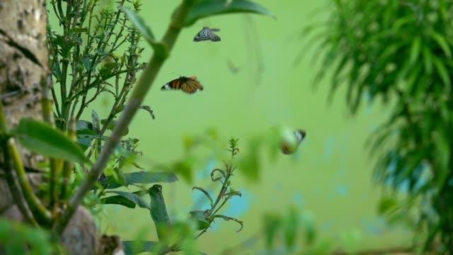 Coloridas-mariposas-volando-en-cámara-lenta-