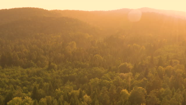 DRONE:-Flying-above-the-vast-coniferous-forest-on-an-idyllic-summer-evening-