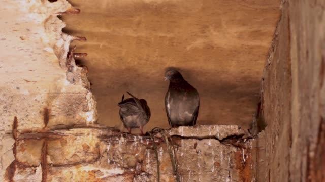 Zerstörung-des-Betons-durch-Vogelkot