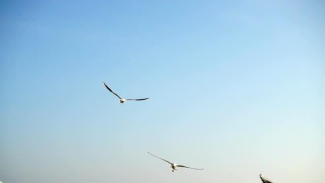 Las-gaviotas-vuelan-sobre-el-mar-Cámara-lenta-