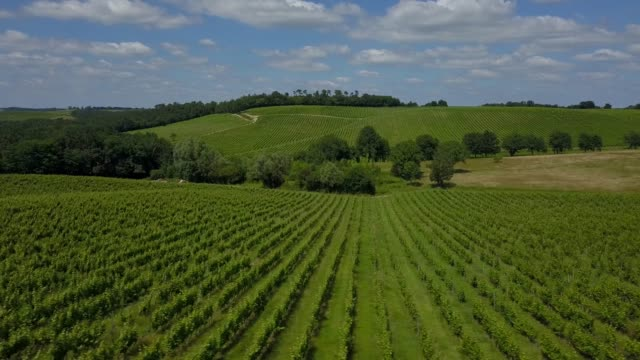 Aerial-view-beautiful-landscape-Bordeaux-Vineyard-at-sunrise-film-by-drone-in-summer