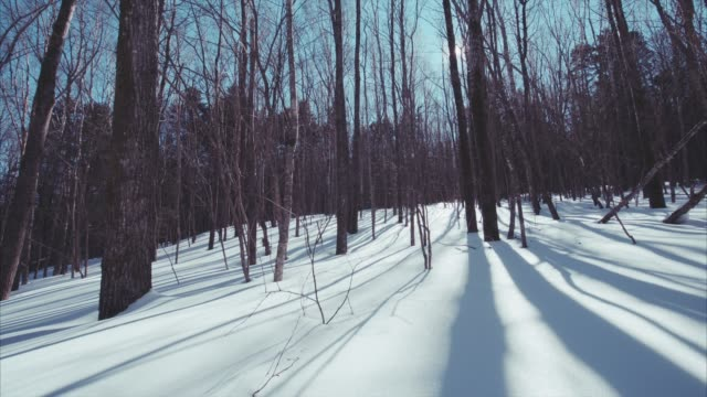 Slow-sliding-view-of-beautiful-snowy-winter-leafless-forest-Bright-sunny-day