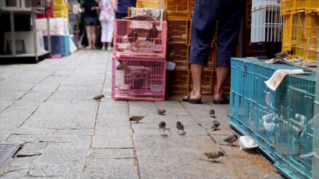 aves-comiendo-semillas-de-la-planta-en-un-mercado-ocupado