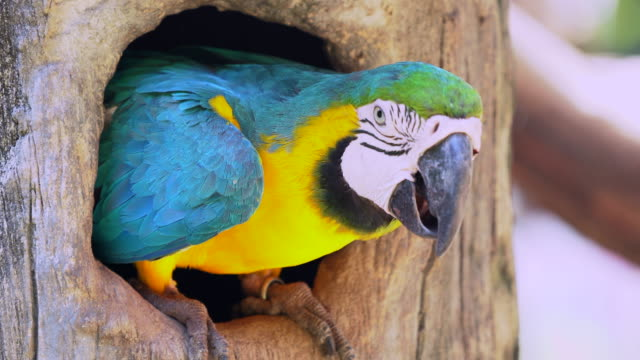 Macaw-Parrot-in-Wood-hollow