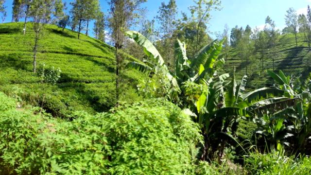 Imágenes-de-4K-de-un-tren-pasando-por-las-plantaciones-de-té-de-Sri-Lanka