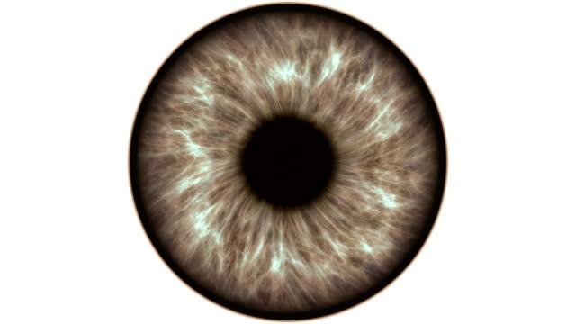 Ojo-humano-marrón-dilatar-y-contraer-Muy-detallada-extreme-Close-up-de-iris-y-pupila-