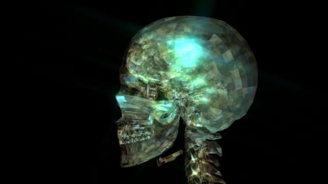 Animación-de-cráneo-humano