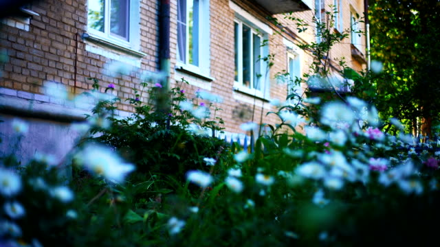 Daisies-and-other-flowers-in-the-courtyard-of-a-multi-storey-building