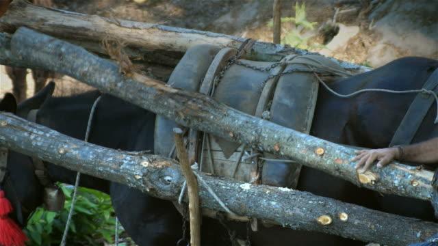 Carga-animal-pack-mule-con-troncos-de-madera