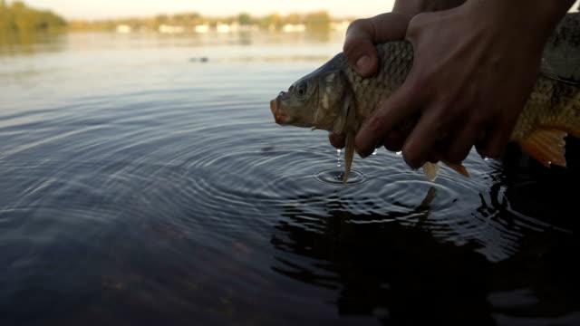 Pescados-de-la-carpa-lanza-pescadores-a-río-deporte-de-competición-la-pesca-de-cebo