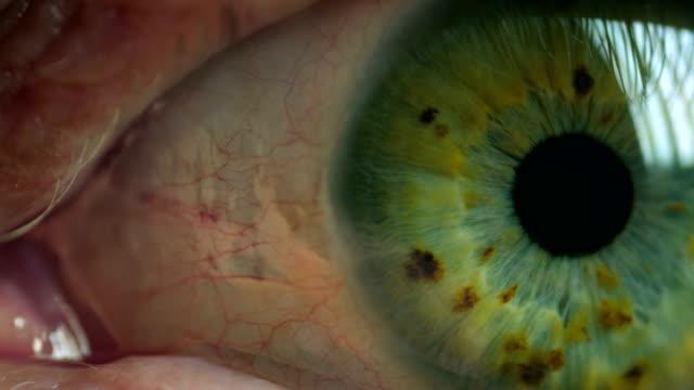 Green-iris-human-eye