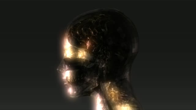 Animación-de-anatomía-de-la-cabeza