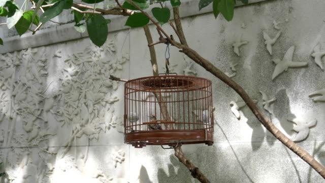 weiten-Blick-über-ein-Haustier-Vogel-im-Käfig-zu-verkaufen-in-Mongkok-Markt-in-Hongkong