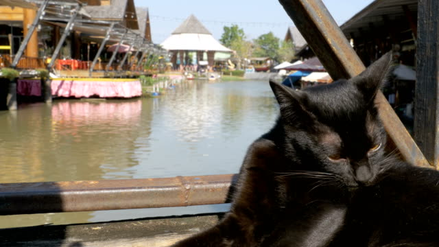 Black-Cat-Resting-and-Licking-Lying-on-Wooden-Pier-in-the-Pattaya-Floating-Market-Thailand