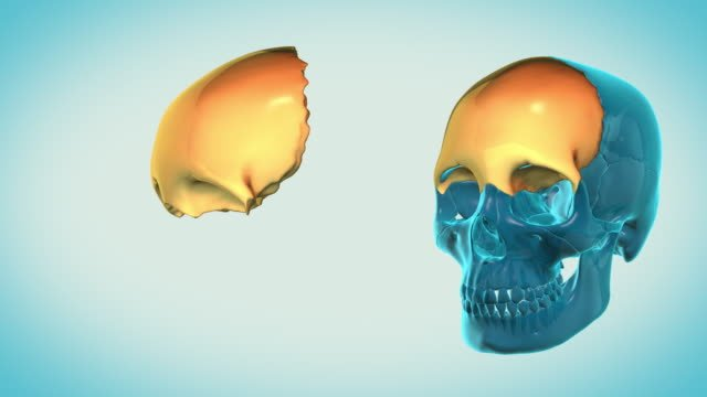 Frontal-Bone-with-a-heavenly-background