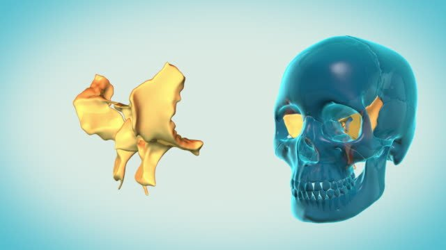 Sphenoid-Bone-with-a-heavenly-background