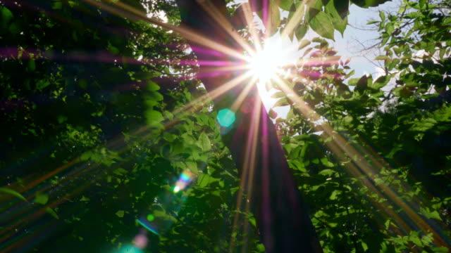 Principios-de-sol-matutino-entra-a-través-de-manzanos-en-la-salida-del-sol