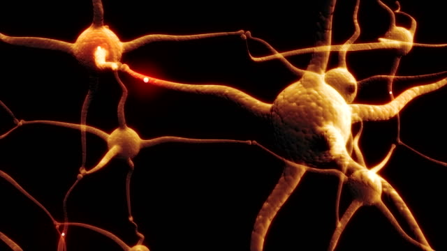 Real-Neuron-synapse-network-with-red-electric-impulse-activity-able-to-loop