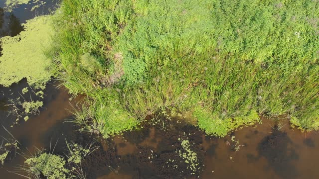 River-Bed---top-view-from-drone