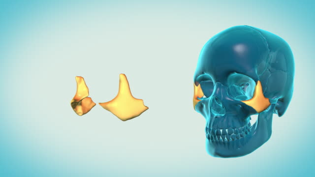 Zygomatic-Bone-with-a-heavenly-background