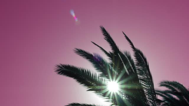 Palmera-balanceándose-contra-cielo-rojo-con-la-llamarada-del-sol-vista-inferior