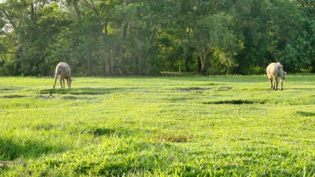 green-grass-on-green-field