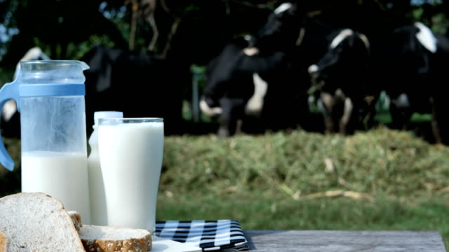 Milk-in-glass-and-bread-breakfast-in-morning-background-of-dairy-cows-in-a-farm-Food-and-Healthy-milk-concept-Slow-Motion