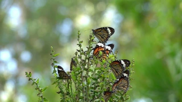 Colorida-mariposa-volando-en-cámara-lenta-