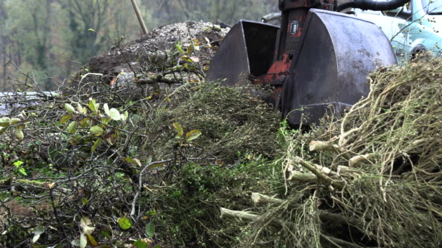 excavator-bucket-lifts-sawed-trees