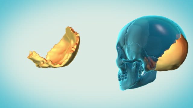 Occipital-Bone-with-a-heavenly-background