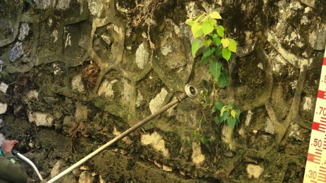 Árbol-peepal-de-corte-en-la-pared-