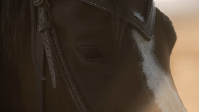Extreme-close-up-of-eyes-of-thoroughbred-racehorse-Eyes-of-beautiful-horse