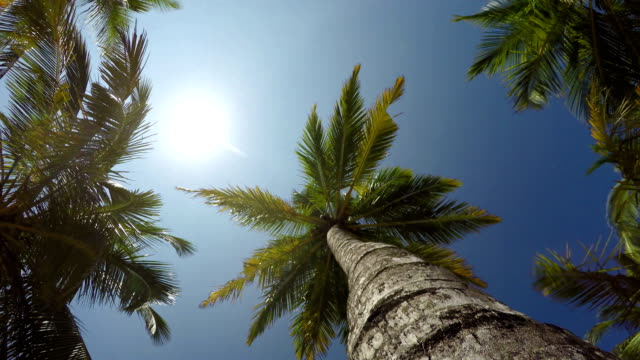 4K-video-of-a-palm-tree-rotating-POV-view-from-underneath-Exotic-vacation-holidays-spending-concept-